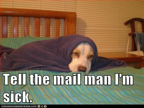 funny-dog-pictures-i-has-a-hotdog-da-mai